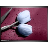 Glas schilderij Tulpen   Paars, Blauw
