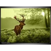 Glas schilderij Hert | Bruin, Groen