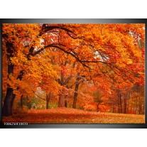 Glas schilderij Herfst | Bruin, Oranje