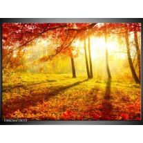 Foto canvas schilderij Natuur | Bruin, Geel, Rood
