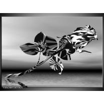 Glas Schilderij Bloem, Roos | Grijs Zwart, Wit