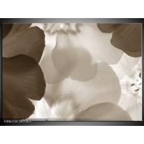 Glas Schilderij Bloem | Sepia