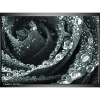 Glas Schilderij Bloem, Roos | Grijs, Groen