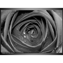 Glas Schilderij Roos, Bloem | Zwart, Grijs