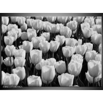 Glas Schilderij Bloem, Tulpen   Zwart, Grijs