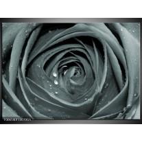 Glas Schilderij Roos,Bloem | Grijs, Groen