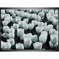 Glas Schilderij Bloemen, Tulpen | Grijs, Groen