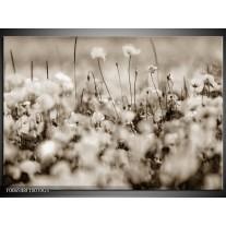 Glas Schilderij Bloemen | Sepia