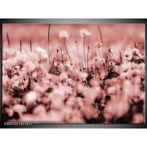 Glas Schilderij Bloemen | Bruin, Rood