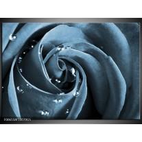 Glas Schilderij Roos   Blauw, Grijs