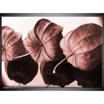 Glas Schilderij Bloem | Bruin, Rood