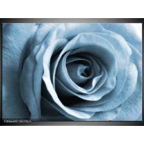 Glas Schilderij Roos, Bloem | Blauw, Grijs, Wit
