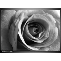 Glas Schilderij Roos, Bloem | Grijs, Zwart