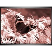 Glas Schilderij Bloemen, Vlinder | Bruin, Rood, Zwart
