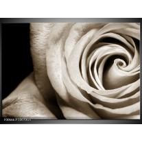 Glas Schilderij Roos, Bloem | Sepia, Bruin, Zwart