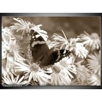Glas Schilderij Bloemen, Vlinder | Sepia, Bruin