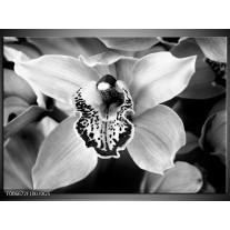 Glas Schilderij Bloem | Zwart, Wit, Grijs