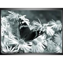 Glas Schilderij Bloemen, Vlinder | Grijs, Groen, Zwart