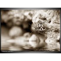 Glas Schilderij Insect | Sepia