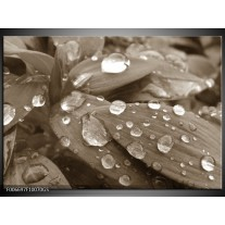 Glas Schilderij Bloem, Druppel | Sepia