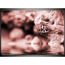 Glas Schilderij Insect | Rood, Bruin