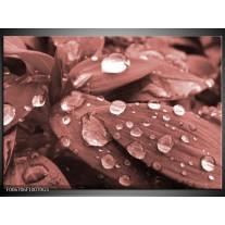 Glas Schilderij Bloem, Druppel   Rood, Bruin
