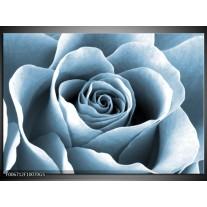 Glas Schilderij Roos, Bloem   Blauw, Grijs