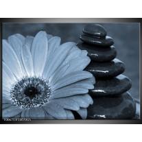 Glas Schilderij Bloem, Stenen | Blauw, Grijs