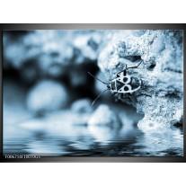 Glas Schilderij Insect | Blauw, Grijs