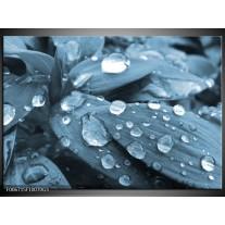 Glas Schilderij Bloem, Druppel | Blauw, Grijs
