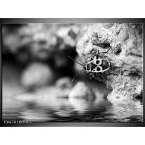 Glas Schilderij Insect | Grijs, Zwart