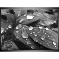 Glas Schilderij Bloem, Druppel | Grijs, Zwart