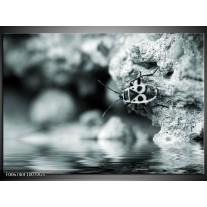 Glas Schilderij Insect | Grijs, Zwart, Groen