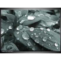 Glas Schilderij Bloem, Druppel | Grijs, Zwart, Groen