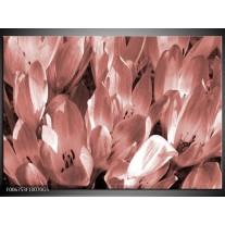 Glas Schilderij Bloemen, Krokus | Bruin, Rood