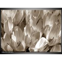 Glas Schilderij Bloemen, Krokus | Sepia
