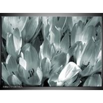 Glas Schilderij Bloemen, Krokus | Grijs, Groen