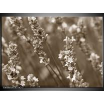 Glas Schilderij Bloemen, Lente | sepia