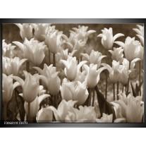 Canvas Schilderij Tulpen, Bloemen | Sepia