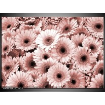 Glas Schilderij Gerbera, Bloemen | Bruin, Rood