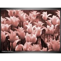 Glas Schilderij Tulpen, Bloemen | Bruin, Rood
