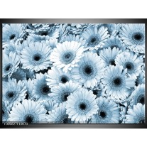 Canvas Schilderij Gerbera, Bloemen | Blauw, Grijs