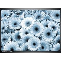 Glas Schilderij Gerbera, Bloemen   Blauw, Grijs