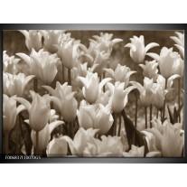 Glas Schilderij Tulpen, Bloemen | Sepia