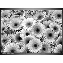 Glas Schilderij Gerbera, Bloemen | Zwart, Grijs
