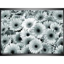 Canvas Schilderij Gerbera, Bloemen | Grijs, Groen