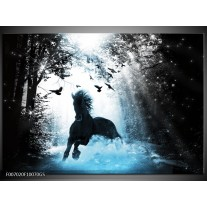 Glas Schilderij Paard, Dieren | Blauw, Zwart, Wit