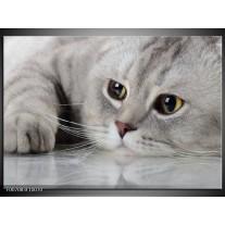 Canvas Schilderij Kat, Dieren   Grijs, Bruin