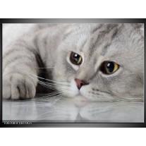 Glas Schilderij Kat, Dieren | Grijs, Bruin