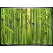 Glas Schilderij Bambus, Natuur | Groen, Geel